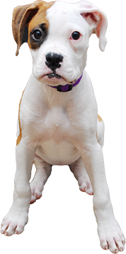 canine-veterinarian