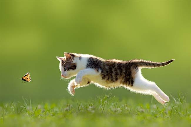 Kitten Care in Vestavia Hills, AL