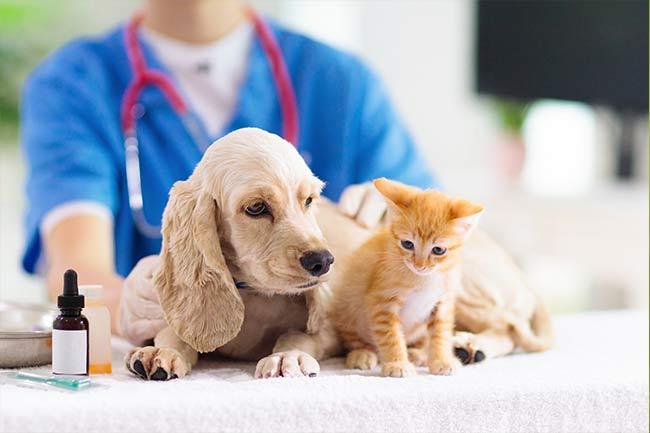 cat-veterinarian-vestavia-hills-al-9