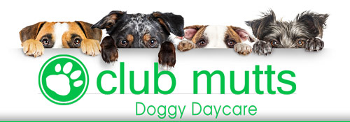 Doggy Daycare in Vestavia Hills AL