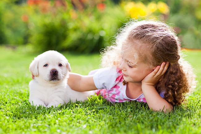 Puppy Health Care in Vestavia Hills, AL