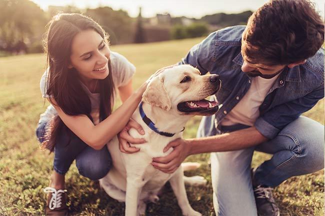 Adult Dog Care in Vestavia Hills, AL