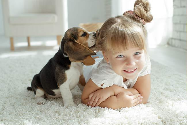 Canine Wellness Care in Vestavia Hills, AL