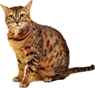 feline-veterinarian