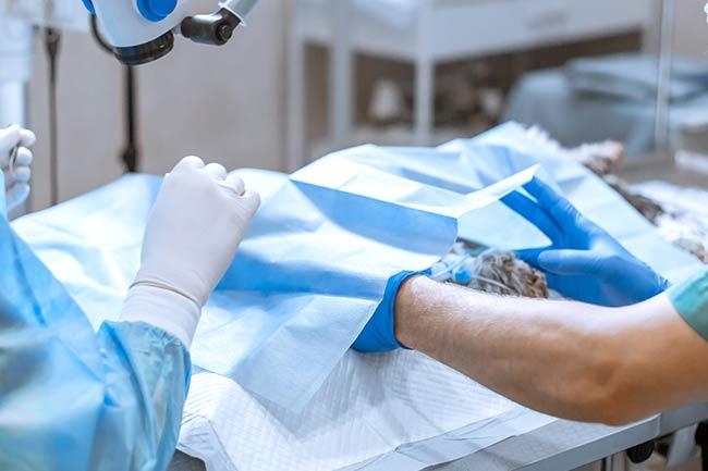 Dog Cat Surgery Vet in Vestavia Hills, AL