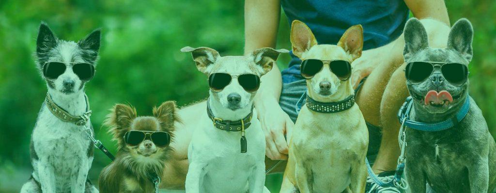 Preferred Doggy Daycare in Vestavia Hills AL