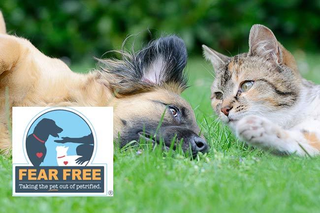fear-free-veterinary-practice