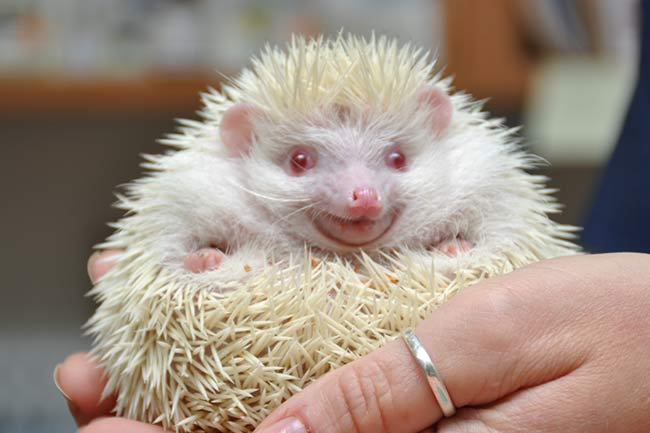 Pocket Pet Wellness Care in Vestavia Hills, AL