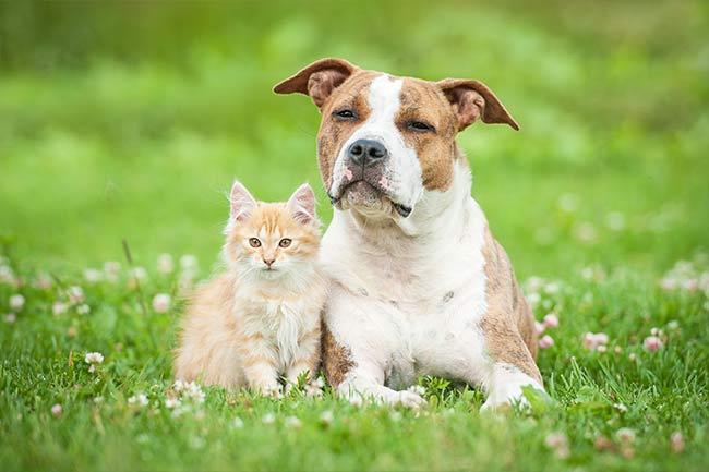 veterinarian-near-Homewood-al