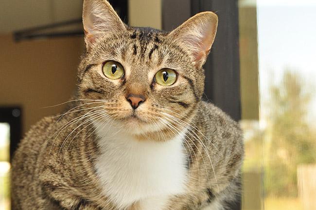Adult Cat Care in Vestavia Hills, AL