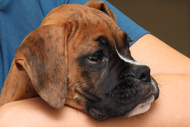 Frequently Asked Questions at Pet Wellness Animal Hospital