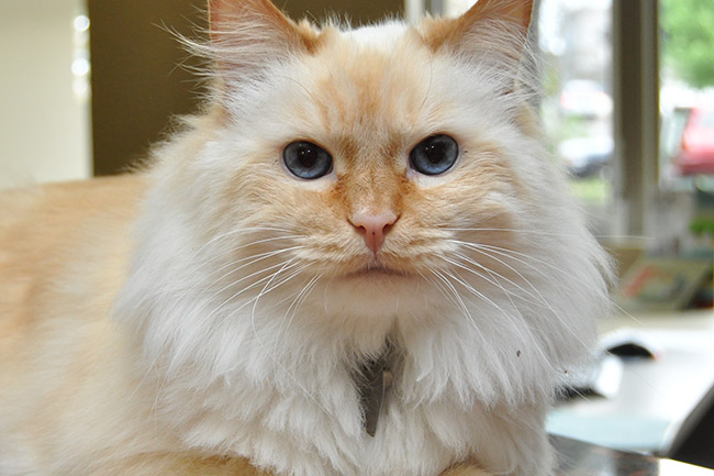 Feline Wellness Care in Vestavia Hills, AL