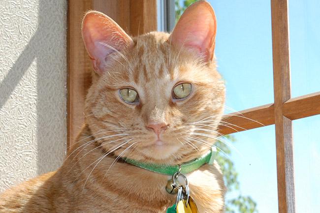 Senior Cat Care in Vestavia Hills, AL